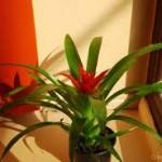apartament plante