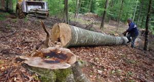BOSNIA-FORESTRY-LOGGING-ENVIRONMENT