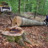 BOSNIA-FORESTRY-LOGGING-ENVIRONMENT