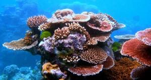 marea-bariera-corali
