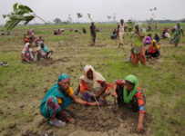 India Planting Trees