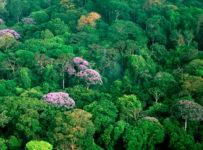 Protecția pădurilor