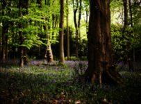 paza pădurilor