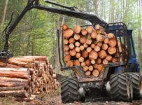 lemn tăiat ilegal