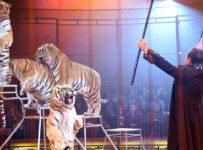 circul cu animale