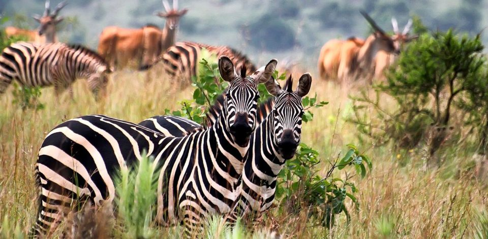 Parcul Național Akagera