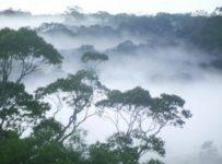 Pădurile tropicale