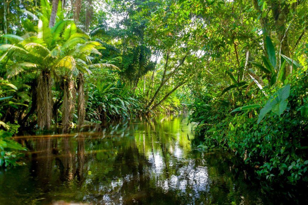Recuperarea Amazonului