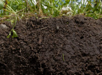 Ajustarea temperaturii solului