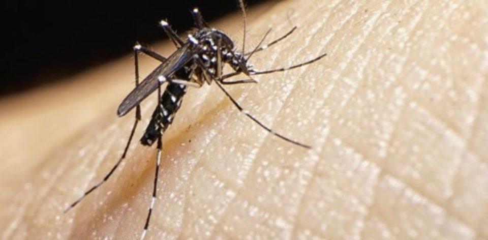 țânțarii